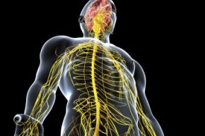 The central nervous system is deeply affected by fatal familial insomnia.