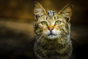 Even though picking up stray cats may be hard to resist, it's better to be safe than sorry. Feral creatures can spread diseases that could seriously jeopardize your health.