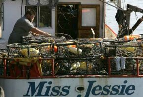 Would the Miss Jessie permit bananas and suitcases on its deck?