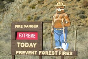 Smokey Bear warns of forest fires