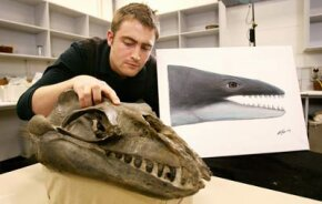 Museum Victoria Research Associate and Monash University PhD student Erich Fitzgerald inspects the skull of a 25-million-year-old fossil from southeast Australia identifying a new family of small, highly predatory, toothed baleen whales with enormous eyes