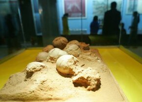 Fossilized eggs on display at the Inner Mongolia Museum in the regional capital of Hohhot