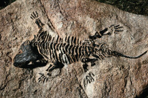 Fossils preserve the ancient past. See more dinosaur pictures.