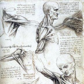 Leonardo da Vinci studies human biomechanics.