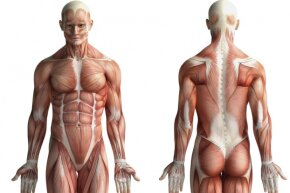 Medical illustration combines scientific knowledge with artistic skill.