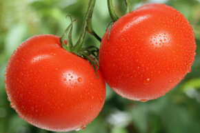 Fresh tomatoes can be used in so many recipes. What are you in the mood for? See pictures of international tomato recipes.