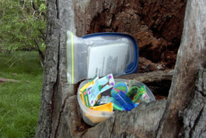 A geocache in plastic container, hidden in tree trunk