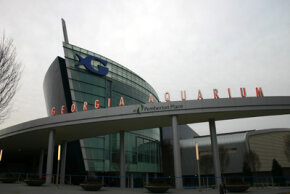 The Georgia Aquarium