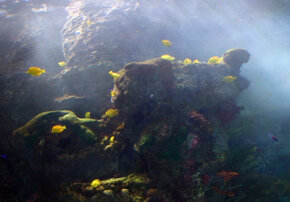 A large coral reef in the Tropical Diver gallery. Much of this coral, specially grown off the coast of Fiji, is alive.