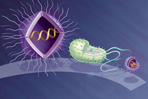 An artist's rendering of a Mimivirus (left) compared with the bacterium Escherichia Coli (center) and an average virus (right).