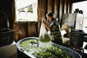 Sixty percent of the female farmers in the U.S. make less than $5,000 in annual sales. Only 3 percent of commercial farms are led by women.