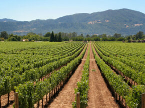 Vineyards may soon be relocating to places like Finland and Ireland.