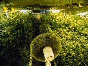 Controlled Substance Image Gallery An oscillating fan cools down the crops in a grow house. See more ­controlled substance pictures.