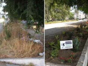 This before-and-after shot shows a median prior to guerrilla gardening and after. With time -- and a little watering and weeding -- the plants will grow into a luscious garden.