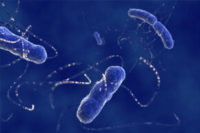 E. coli is a key constituent of your gut flora.