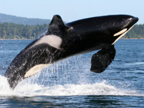 People seem to like hearing about your orca whale watching trip more than they like hearing about your new car.