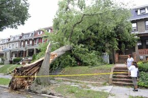 Make sure that trees near your house are cut back to avoid disasters like this one.