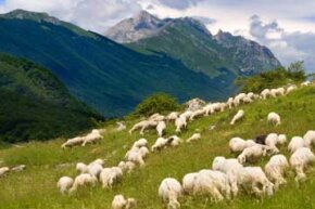 Back in the day, anyone who tended a flock like this likely spent time schlepping up mountainsides. See more pictures of Italy.