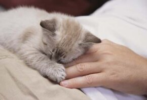 Is it just a fluke, or is your cat really sick? See more cat pictures.