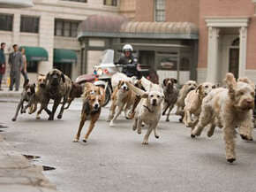 "Some of the residents of the ""Hotel for Dogs"" make a run for it after the police discover their lair."