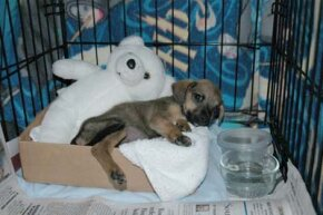 Crate training is a great way to housebreak your puppy. See more pictures of pets.