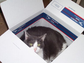 Cats enjoy sleeping in small, enclosed spaces.