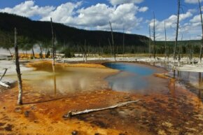 Yellowstone National Park's Opalescent Pool gets its fantastic colors from thermophilic bacteria.