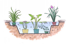 Special pots, pans, and tubs can be used to plant water gardens.