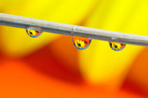 Try to find a raindrop you can shoot through if you want to catch a reflection of other objects in the water.