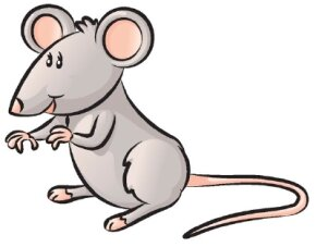 Mammal Image Gallery Learn how to draw a mouse in just four simple steps. Use this article's clear directions and illustrations to guide you through each step. See more pictures of mammals.