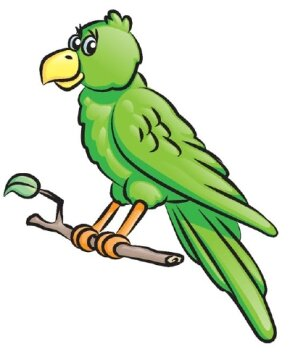 Learn how to draw this parrot.