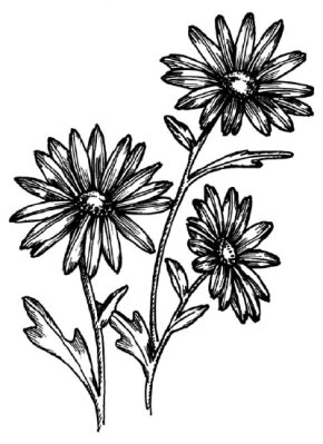 Flower Image Gallery You can learn how to draw this daisy in a few steps. See more pictures of flowers.