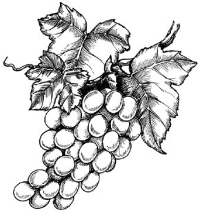 Grapes Image Gallery Learn to draw grapes and other flowers and plants with our step-by-step instructions. See more pictures of grapes.