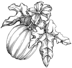 Halloween Image Gallery Learn how to draw a pumpkin and other flowers and plants with our easy instructions. You can see many more pumpkins in these Halloween pictures.