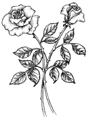 Flower Image Gallery Learn how to draw a rose and other flowers and plants with our step-by-step instructions. See more pictures of flowers.