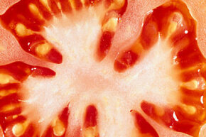 Hundreds of tomato seeds can be harvested from a single plant. We'll explain how. See more heirloom tomato pictures.