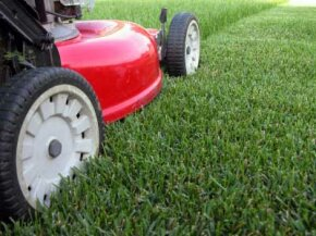 You may not be looking for a perfectly manicured front yard, but keeping a tidy lawn isn't difficult.