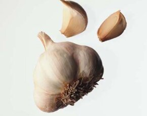 Garlic is versatile and delicious. See more culinary herb pictures.