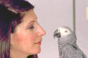 Though little Alex (pictured here with his primary researcher, ethologist Irene Pepperberg) has died, his legacy lives on.