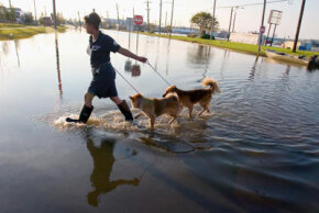 Racelle Carlson from the Arizona Humane Society leads two rescued dogs from a flooded neighborhood in New Orleans, La., to a processing area where the dogs will be examined, fed and evacuated to area shelters on September 6, 2005.