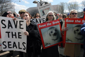 Demonstrators hold signs to protest against the slaughter of harp seals on March 15, 2006, in Washington, D.C. The Canadian commercial seal hunt is the largest marine mammal slaughter in the world.