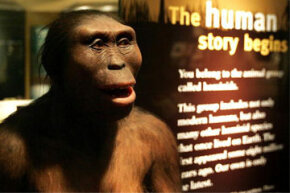 """A representation of Lucy welcomes visitors to Chicago's """"Evolving Planet"""" exhibit at the Field Museum."""