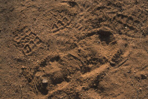 Footprints are examined by customs agents tracking drug smugglers along the Mexican border. How can impression evidence help forensic scientists identify suspects? See more forensics pictures.