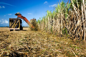 Sugarcane may make a better alternative source material for resins than corn.