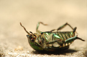 A world without insects would spell disaster for animals all the way up the food chain.