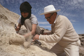 Jose Bonaparte (right) and Raul Vacca unearth a dinosaur egg in the Patagonia region of Argentina. See more pictures of dinosaurs.