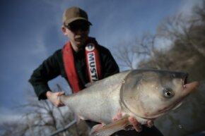 Steve Tyscko holds a carp in Havana, Illinois, on March 11, 2011. Asian carp have spread from retention ponds in the southern U.S. to the Mississippi River to the Missouri and Illinois rivers to the Great Lakes.