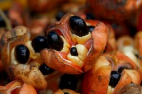 Ackee fruit on display in a market stall.