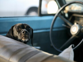 A good dog can make a road trip complete. Check out these pet pictures.