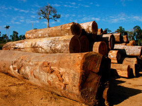 For a post-Kyoto treaty to succeed, developing polluters like China, India and Brazil would have to play a part. The Brazilian Amazon is being deforested rapidly by loggers, ranchers, farmers and developers.